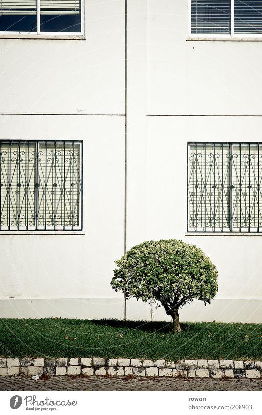 strauch Natur Pflanze Baum Sträucher Grünpflanze Menschenleer Haus Bauwerk Gebäude grün Fassade Gitter Detailaufnahme Bürgersteig Bordsteinkante Farbfoto