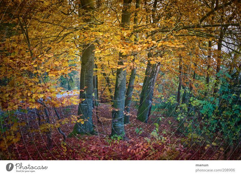 Herbstwald Ausflug Umwelt Natur Landschaft Baum Laubwald Herbstlaub herbstlich Herbstfärbung Herbstlandschaft Park Wald schön mehrfarbig gelb Erholung