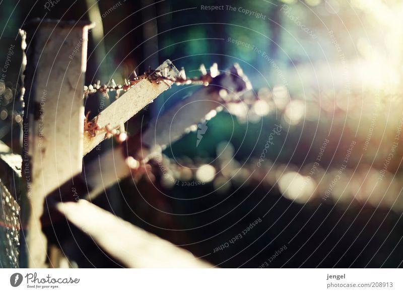 stachelig Sommer alt dreckig Spitze Farbfoto Außenaufnahme Menschenleer Tag Dämmerung Licht Kontrast Lichterscheinung Sonnenlicht Sonnenstrahlen Sonnenaufgang