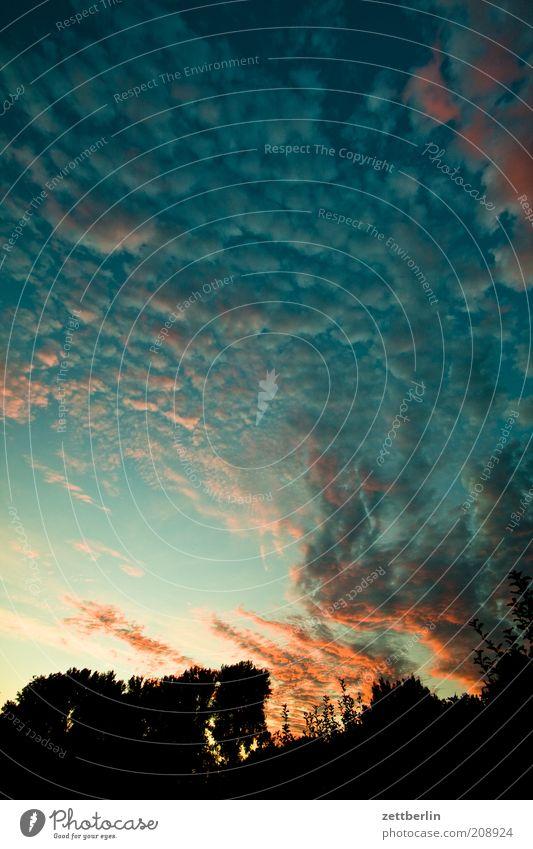 Typischer Schrebergartenhimmel Sommer Wolken Romantik Abenddämmerung dramatisch Juli Juni Sonnenuntergang Altokumulus floccus spektral Farbenspiel Sommerabend