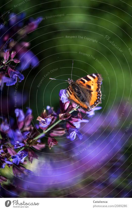 Sonnige Tage Natur Pflanze Sommer grün Tier Leben Blüte Garten braun fliegen Stimmung orange Design ästhetisch Blühend violett