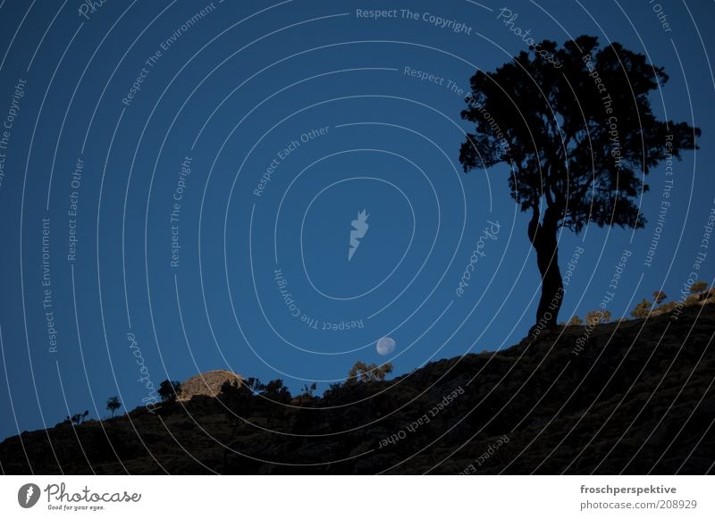 -36 grad Baum Berge u. Gebirge Stein Sand Landschaft Stimmung Felsen Erde Nachthimmel Hügel Mond Urelemente Schüchternheit Mondaufgang
