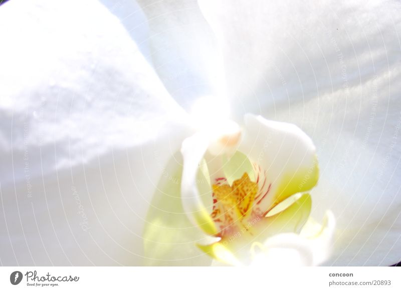 Blümsen weiß Blume Pflanze Blüte hell frisch rein Klarheit Orchidee Genauigkeit