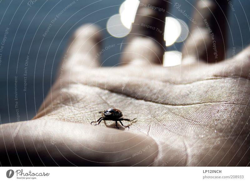 Dein Leben in meiner Hand Haut Meer Mensch maskulin Mann Erwachsene 1 beobachten berühren fangen Respekt Hautfalten Tierhaut Finger Lebenslinie Käfer Insekt