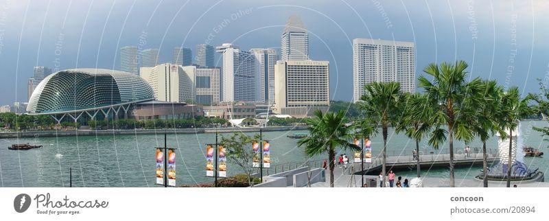 Palmen & Wolkenkratzer Sommer Allee traumhaft Urlaubsstimmung Stadt Meer Thailand Singapore Los Angeles Sonne exotisch Skyline blau Fluss Merlion