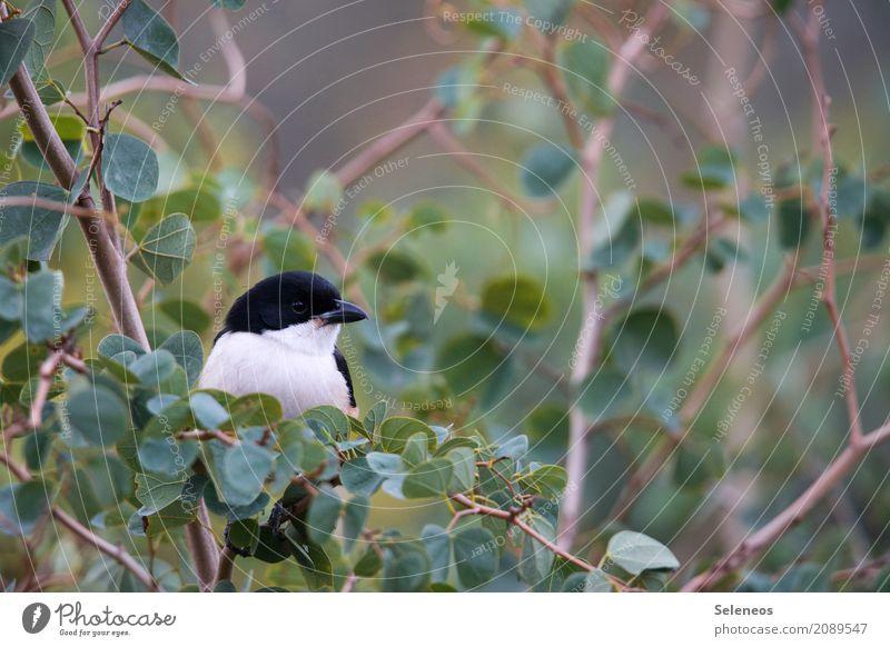 Päuschen Natur Sommer Tier Blatt Umwelt Frühling natürlich klein Garten Freiheit Vogel Zufriedenheit Park frei Wildtier Sträucher