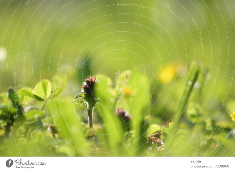 käferperspektive Umwelt Natur Pflanze Frühling Gras Grünpflanze Rasen grün Perspektive Farbfoto Außenaufnahme Nahaufnahme Makroaufnahme Textfreiraum oben Tag