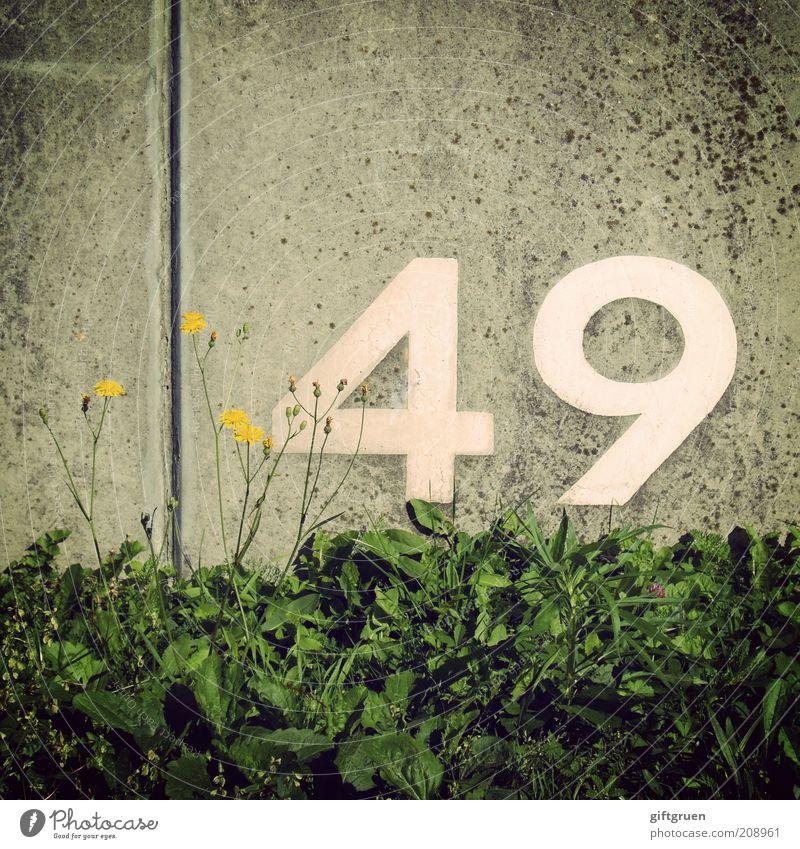 indium weiß Blume Pflanze Blatt gelb Wand Blüte Gras grau Geburtstag Beton Ordnung Schriftzeichen Ziffern & Zahlen Zeichen Reihe