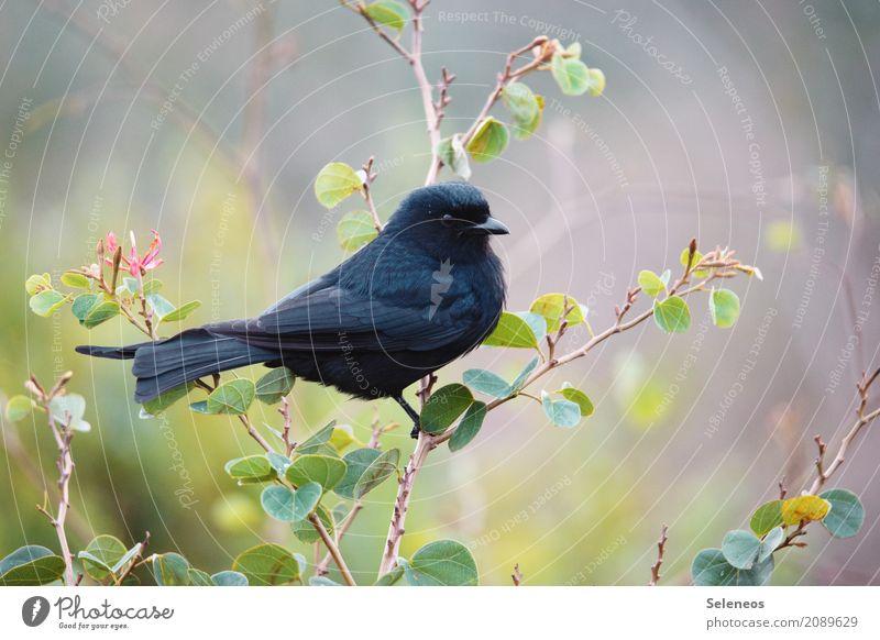 Goth Natur Pflanze Sommer Blatt Tier schwarz Umwelt Frühling natürlich Garten Vogel Park Wildtier Sträucher nah Tiergesicht