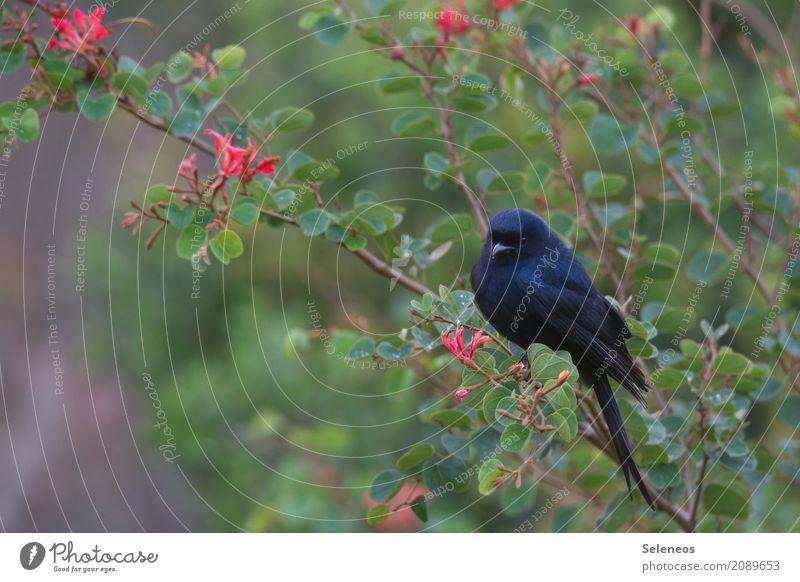 schwarz/grün Ferien & Urlaub & Reisen Ausflug Ferne Freiheit Sommer Umwelt Natur Frühling Pflanze Baum Sträucher Blatt Blüte Garten Park Tier Wildtier Vogel