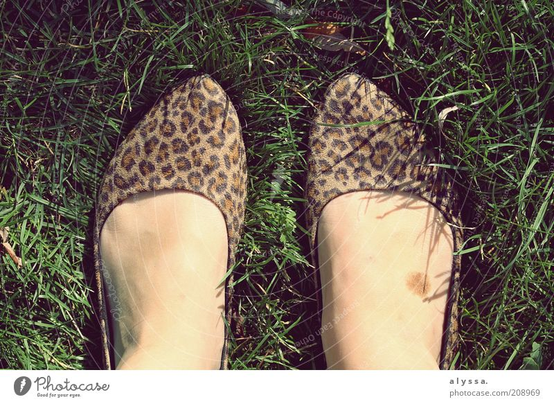 Leopardenfuß. Mensch Sommer Erwachsene feminin Wiese Gras Mode Fuß Schuhe modern einzigartig 18-30 Jahre trendy Damenschuhe Leopardenmuster Schuhpaar