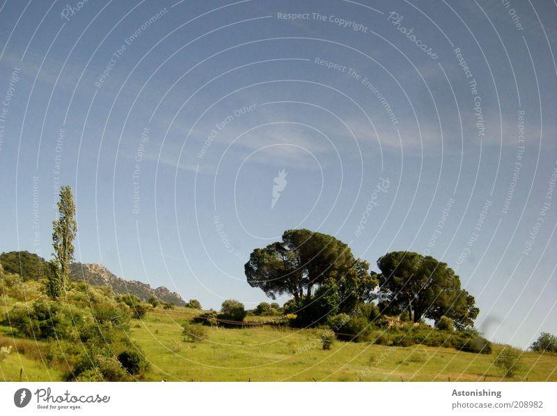 drüben am Hügel Umwelt Natur Landschaft Pflanze Erde Himmel Sommer Schönes Wetter Baum Gras Sträucher Grünpflanze Wildpflanze Wiese Wald blau grün Spanien ruhig