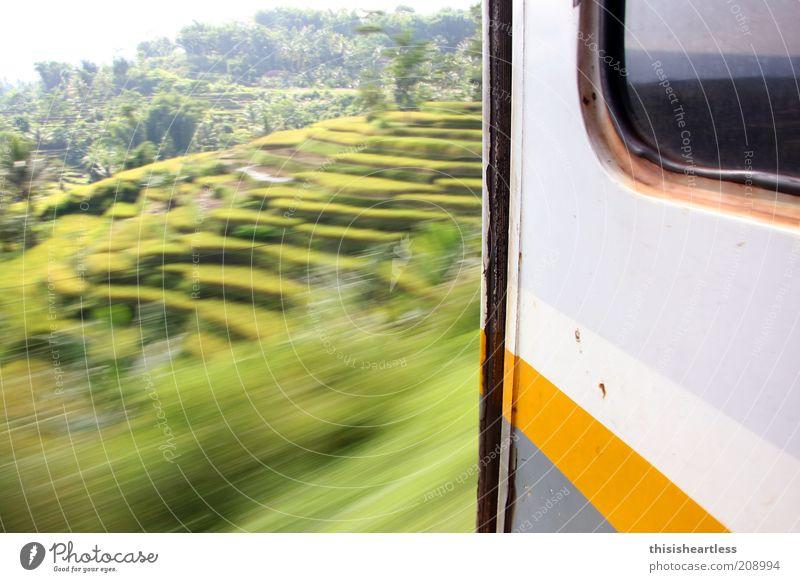 mehr Träume als ich schlafen kann! Natur Baum Sommer Ferien & Urlaub & Reisen Landschaft Umwelt Gras Bewegung Ausflug Eisenbahn Politische Bewegungen Sträucher