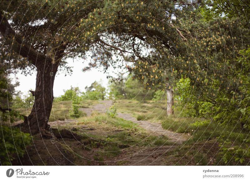 Wege Natur grün Baum Sommer ruhig Wald Erholung Leben Freiheit Landschaft Umwelt Wege & Pfade träumen Zeit natürlich einzigartig
