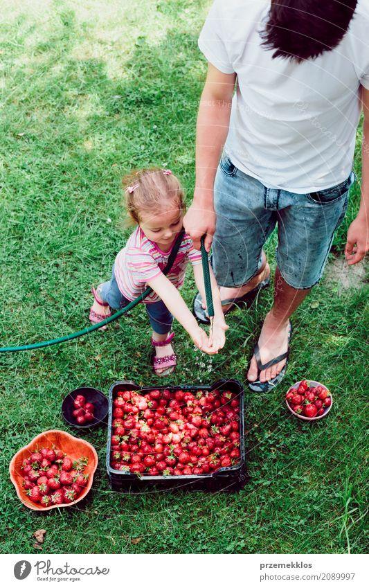 Geschwister, die Erdbeeren frisch ausgewählt in einem Garten waschen Frucht Sommer Kind Mädchen Junge Familie & Verwandtschaft 2 Mensch Natur natürlich oben