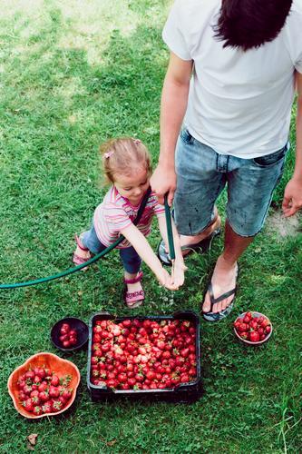 Geschwister, die Erdbeeren frisch ausgewählt in einem Garten waschen Mensch Kind Natur Sommer grün rot Mädchen natürlich Junge Familie & Verwandtschaft oben