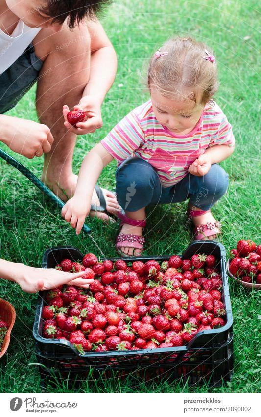Geschwister, die Erdbeeren frisch ausgewählt in einem Garten waschen Frucht Sommer Kind Mädchen Junge Familie & Verwandtschaft 2 Mensch Natur natürlich saftig