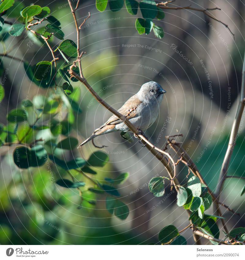Spatzilein, du musst nicht traurig sein Ausflug Ferne Freiheit Sommer Umwelt Natur Schönes Wetter Pflanze Baum Sträucher Blatt Garten Park Tier Wildtier Vogel