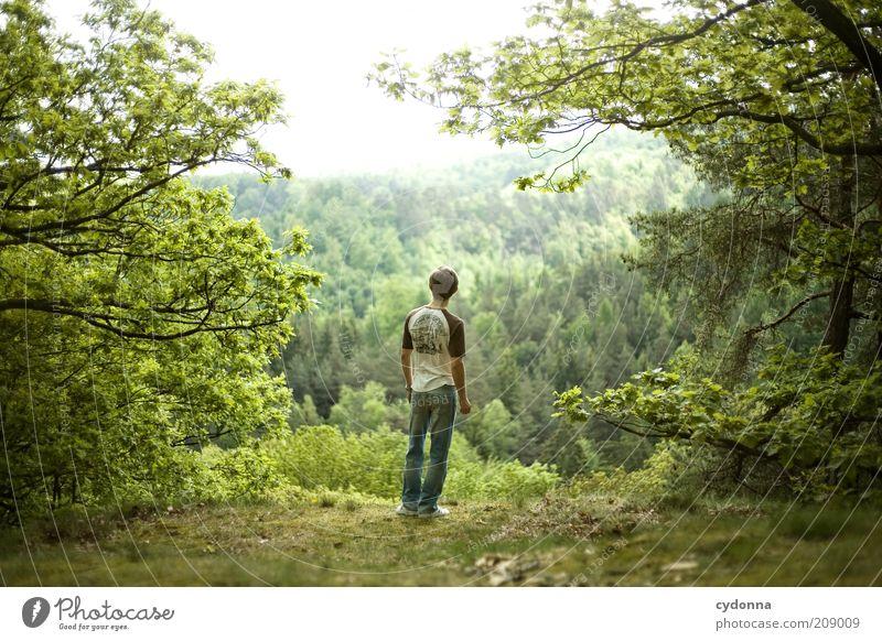 Sehnsucht Mensch Natur Jugendliche grün Baum ruhig Erwachsene Wald Ferne Erholung Umwelt Landschaft Leben Gefühle Freiheit Frühling
