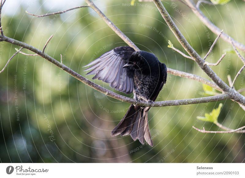 Psst. Ich bin Batman. Natur Pflanze Sommer Baum Tier Ferne Wald Umwelt Frühling natürlich Garten Freiheit Vogel Ausflug Park Wildtier
