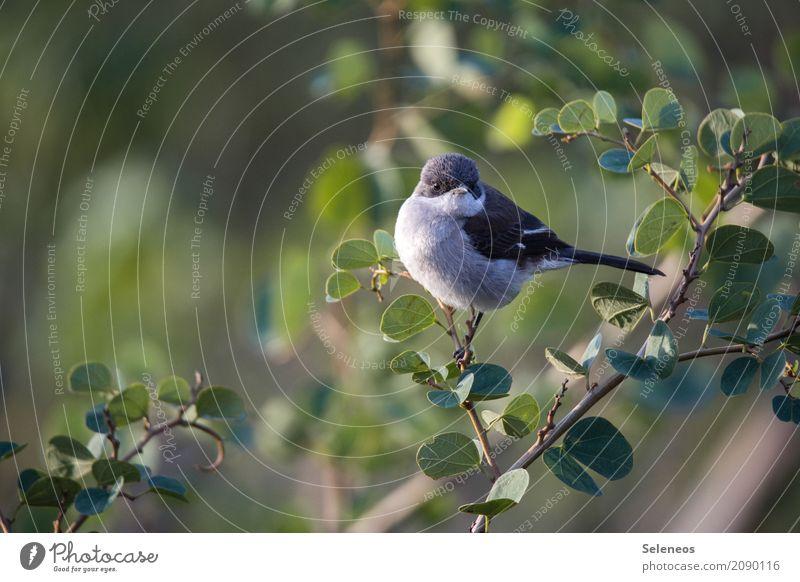 Good morning sunshine Umwelt Natur Sonnenaufgang Sonnenuntergang Frühling Sommer Schönes Wetter Baum Sträucher Garten Park Tier Wildtier Vogel 1 frei natürlich