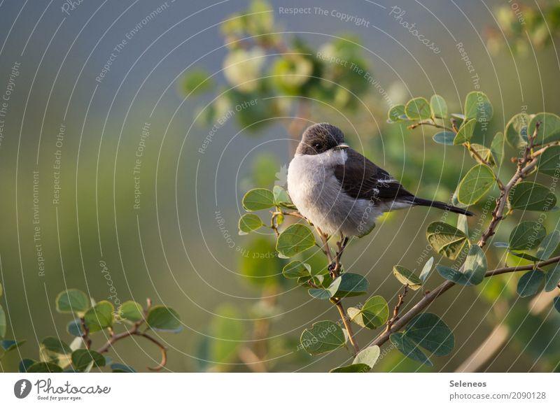 Pieps Natur Pflanze Baum Tier Blatt Umwelt natürlich klein Garten Freiheit Vogel Park Wildtier Sträucher Schönes Wetter nah