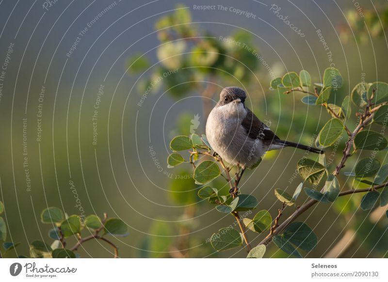 Genuss der letzten Abendsonne Natur Pflanze Sommer Tier Blatt Ferne Umwelt Frühling natürlich klein Garten Freiheit Vogel Park Wildtier Sträucher