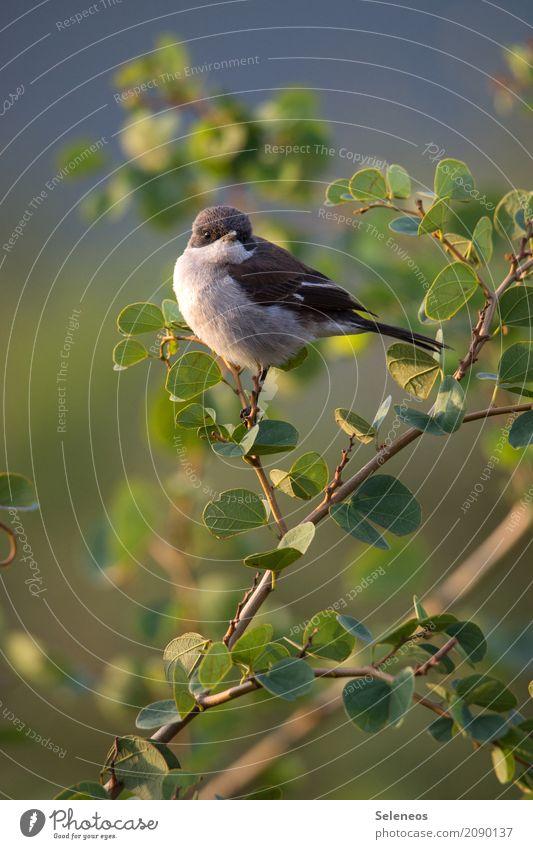 Sonne auf den Bauch scheinen lassen Ferne Freiheit Sommer Umwelt Natur Pflanze Baum Sträucher Blatt Garten Park Tier Wildtier Vogel 1 klein nah natürlich