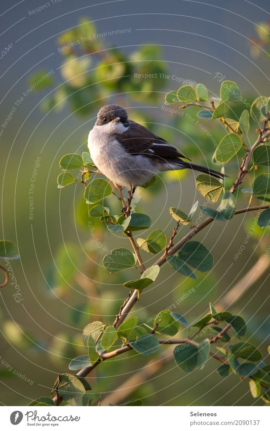 Sonne auf den Bauch scheinen lassen Natur Pflanze Sommer Baum Blatt Tier Ferne Umwelt natürlich klein Garten Freiheit Vogel Park Wildtier Sträucher