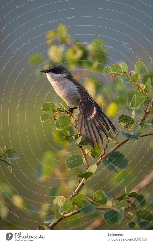 Vögelchen streck dich Natur Sommer Blatt Tier Umwelt Frühling natürlich Garten Freiheit Vogel Park Wildtier Sträucher Schönes Wetter Flügel nah