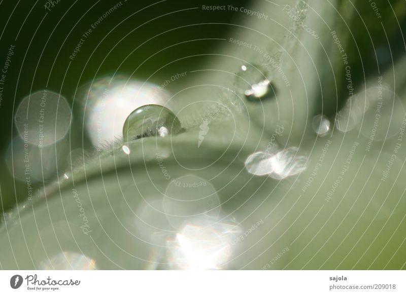 glitzerwerk Natur Wasser Pflanze Blatt hell glänzend nass Wassertropfen ästhetisch Tropfen leuchten feucht Tau Urelemente Makroaufnahme Blattgrün