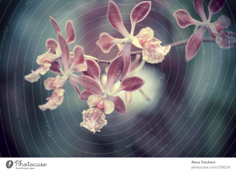 Zauber Natur schön weiß Blume Pflanze Sommer Gefühle Blüte Frühling Umwelt ästhetisch Wachstum Klima violett außergewöhnlich Blühend