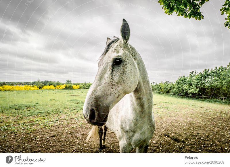 Pferdenahaufnahme auf einem Feld im wolkigen Wetter Himmel Natur blau Sommer schön grün Baum Landschaft Wolken Tier Gesicht Wiese Sport Gras Holz braun