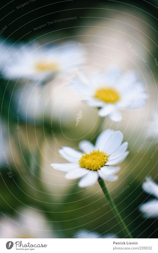 place to be Natur schön weiß Blume grün Pflanze Sommer gelb hell Wetter Umwelt mehrere Klima Stengel Duft genießen