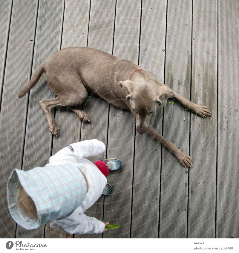 Aufsicht Mensch Kind Mädchen Freude Tier Erholung Glück Holz Hund Linie klein lernen Fröhlichkeit Sicherheit Wachstum authentisch