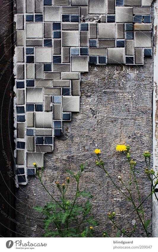 Dust in the Wind Stein Beton blau braun gelb grau grün Verfall kaputt Fliesen u. Kacheln Löwenzahn Mauer verfallen hacken Rost Metall Stahl Eisen