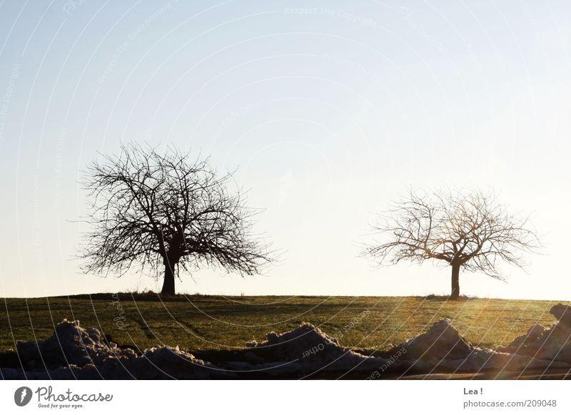 Schneereste Landschaft Himmel Winter Baum Feld kalt Ferne Farbfoto Außenaufnahme Menschenleer Tag 2 kahl Sonnenlicht schmelzen Blauer Himmel Schönes Wetter