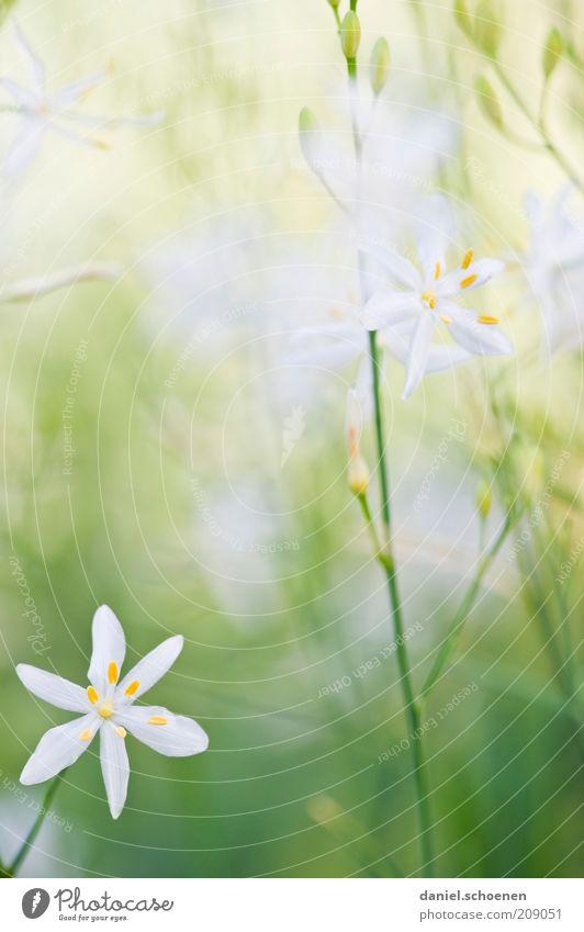 Hochkantpastellmädchenfoto weiß grün Pflanze Sommer Blüte Gras Frühling hell zart Stengel zierlich Textfreiraum