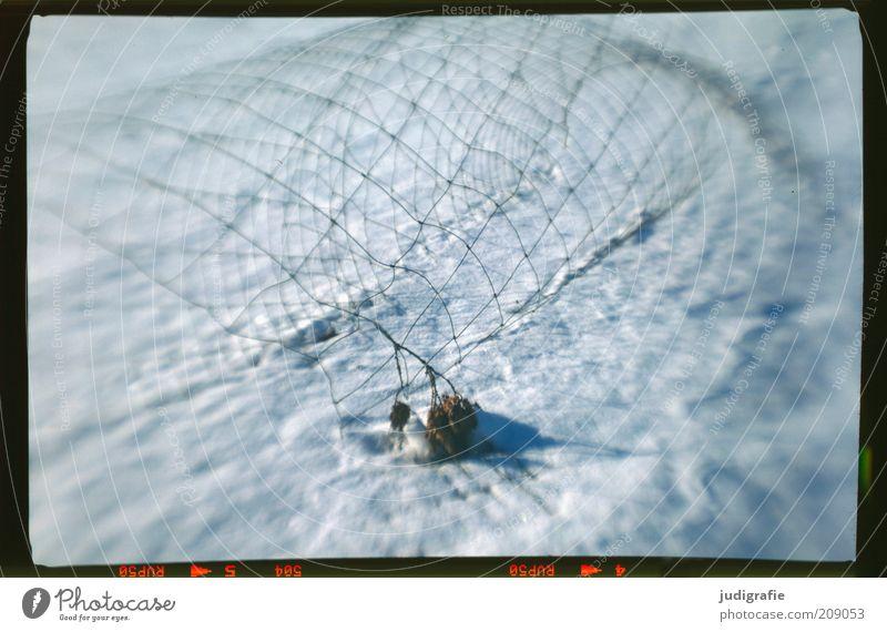Schneezaun Natur Winter außergewöhnlich kalt kaputt Maschendraht Zaun Linie netzartig Netz Farbfoto Außenaufnahme Experiment Menschenleer Unschärfe