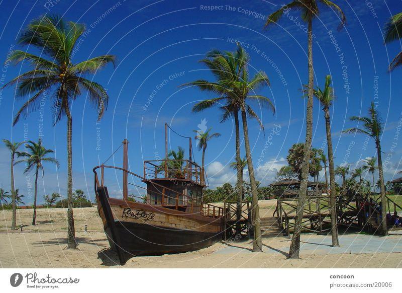 Endless summer (India) Sonne Sommer Strand ruhig Glück Wärme Wasserfahrzeug Physik Indien Palme Blauer Himmel Goa