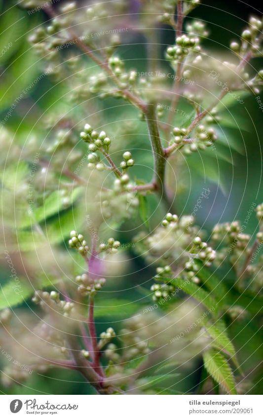 ° Natur schön Blume grün Pflanze Sommer Umwelt rund Sträucher wild natürlich Blütenknospen durcheinander Grünpflanze Zweige u. Äste