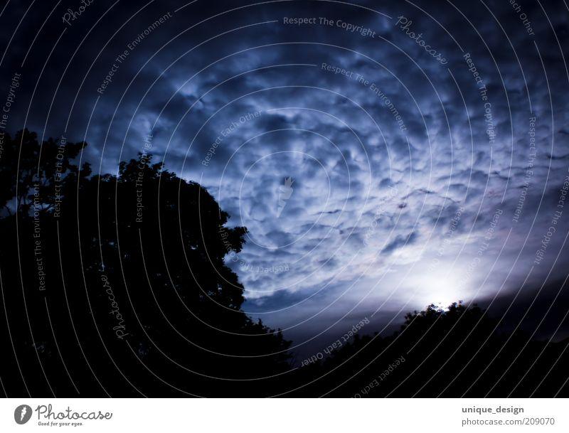 nachthimmel Umwelt Himmel Wolken Nachthimmel Mond dunkel blau schwarz Gedeckte Farben Außenaufnahme Menschenleer Langzeitbelichtung Low Key Baum Silhouette