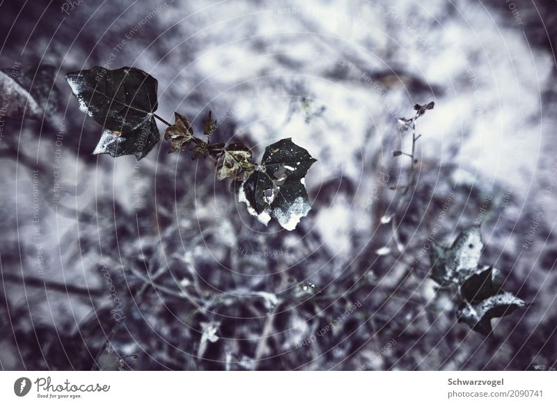 happy little accidents Umwelt Pflanze Grünpflanze Wildpflanze Wachstum natürlich grün weiß Stimmung Traurigkeit Schmerz Sehnsucht Einsamkeit Stress Krise