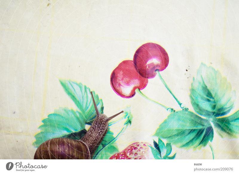 Fruchtschnecke Ernährung Tier Bewegung lustig Zeit Tisch Appetit & Hunger Schnecke Fühler Kirsche krabbeln langsam schleimig Schneckenhaus