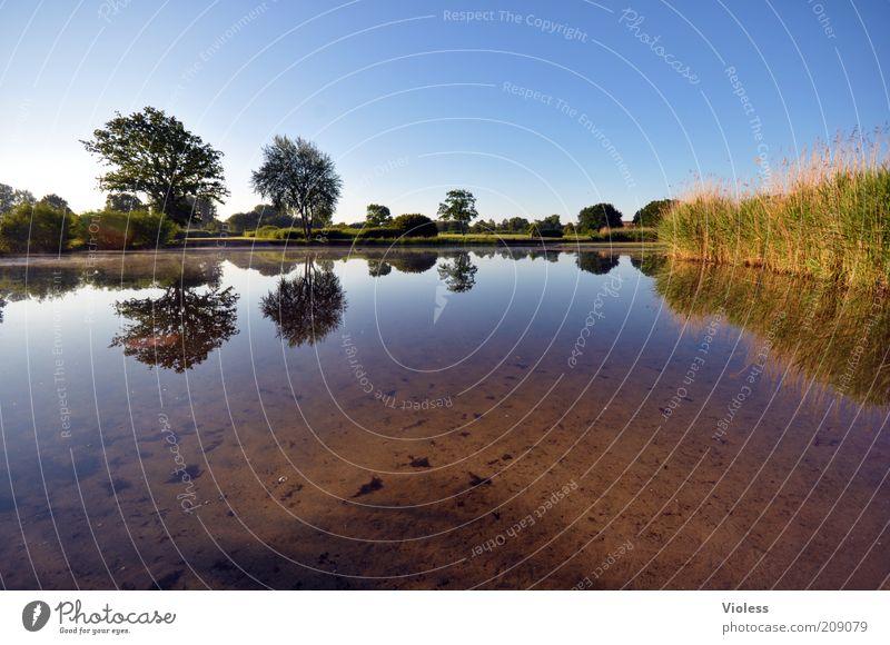 Gespiegelt! Natur Wasser Baum Pflanze Sommer ruhig Park Landschaft Erde Idylle Schilfrohr Seeufer Schönes Wetter Spiegelbild Blauer Himmel