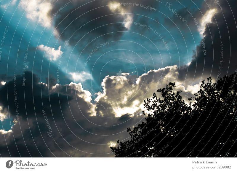 die letzten Sonnenstrahlen Umwelt Natur Landschaft Pflanze Urelemente Luft Himmel Wolken Sonnenlicht Sommer Klima Klimawandel Wetter Schönes Wetter Wind Baum