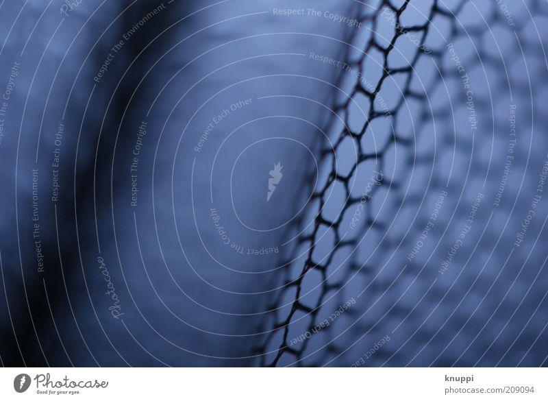 Netz Fliegengitter Insektenschutz Mikroskop Streifen Netzwerk eckig einfach schön blau schwarz Sechseck klein Unschärfe Linie netzartig Schutz Farbfoto