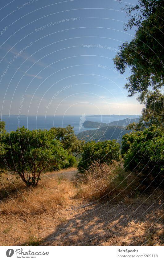 Côte du Var Umwelt Natur Landschaft Pflanze Himmel Sonnenlicht Sommer Schönes Wetter Baum Gras Sträucher Hügel Küste Meer Mittelmeer Frankreich blau braun grün
