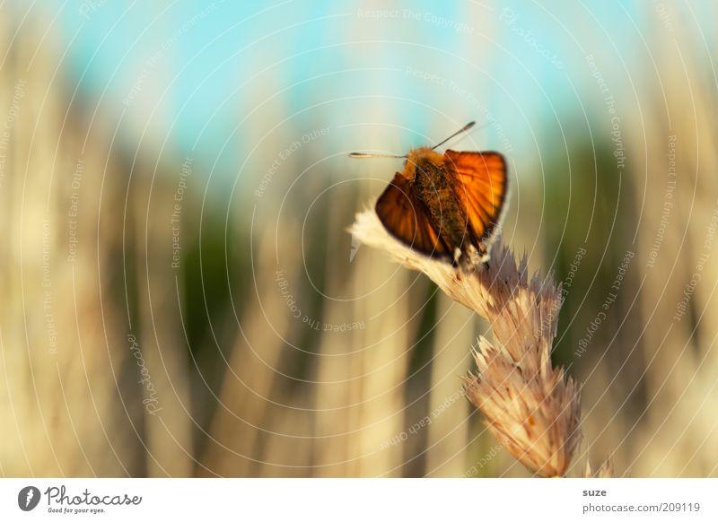 Fliegerstaffel Orange Country Himmel Natur Sommer Pflanze Tier Landschaft Umwelt Gefühle Stimmung Feld orange natürlich Wildtier sitzen warten ästhetisch