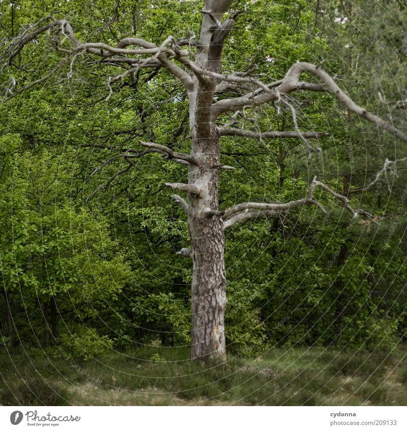 Ich mach da nicht mehr mit Natur Baum Sommer Einsamkeit Wald Umwelt Tod Leben Gras Frühling träumen Zeit ästhetisch Zukunft Wandel & Veränderung bedrohlich